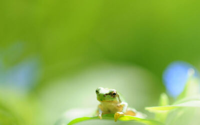 Funny, Kawaii, and Thoughtful Frogs
